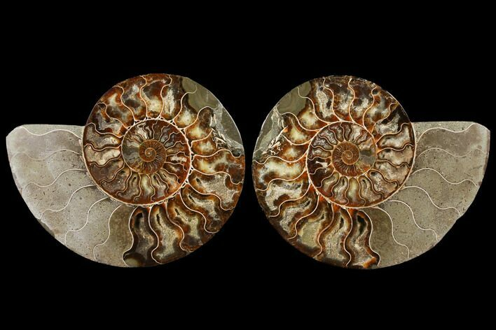 "8.4"" Agatized Ammonite Fossil (Pair) - Madagascar"