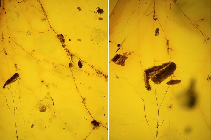 Fossil Spider Web With Insect Leg & Mites In Baltic Amber