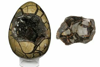 Septarian with Black Calcite & Barite - Fossils For Sale - #124485