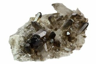 "4.9"" Smoky Quartz Crystal Cluster - Brazil For Sale, #124604"
