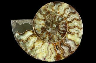 "7.45"" Cut Ammonite Fossil (Half) - Agatized For Sale, #125567"