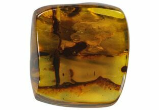 "Buy 1.5""  Polished Chiapas Amber (14 grams) - Mexico - #114841"