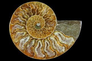 "Buy 3.05"" Agatized Ammonite Fossil (Half) - Madagascar - #125059"