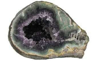 "Buy 11.1"" Wide, Purple Amethyst Geode - Uruguay - #123832"