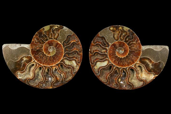 "3.85"" Sliced Ammonite Fossil (Pair) - Agatized"