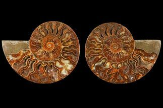 "Buy 4"" Sliced Ammonite Fossil (Pair) - Agatized - #125032"