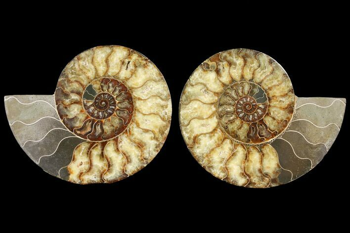 "9.15"" Agatized Ammonite Fossil (Pair) - Madagascar"