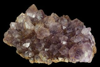 "Buy 2.4"" Amethyst Crystal Geode Section - Morocco - #127978"