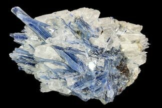 "4.1"" Vibrant Blue Kyanite Crystals In Quartz - Brazil For Sale, #127370"