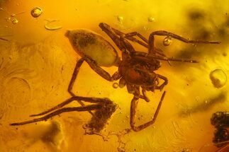 Buy 7mm Detailed Fossil Spider (Araneae) In Baltic Amber - #128278