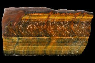 "Buy 3.5"" Polished Tiger's Eye Section - South Africa - #128446"