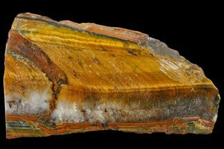 "3.4"" Polished Tiger's Eye Section - South Africa For Sale, #128462"