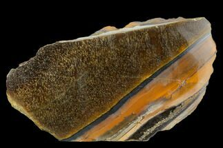 "Buy 4.9"" Polished Tiger's Eye Section - South Africa - #128491"