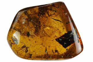 Fossil Ant, Fly, Mites and More In Amber - Myanmar For Sale, #128939