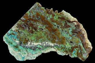 "5.75"" Petrified ""Colla Wood"" With Chrysocolla & Malachite - Turkey For Sale, #129068"