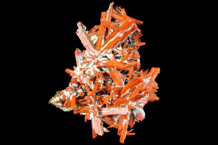 "2.3"" Bright Orange Crocoite Crystal Cluster - Tasmania"