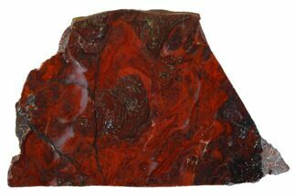 "4.3"" Polished Stromatolite (Collenia) Slab - Minnesota For Sale, #129230"