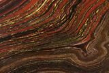 "13.7"" Polished Tiger Iron Stromatolite - 3.02 Billion Years - #129340-1"