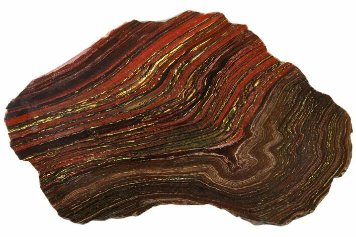 "13.7"" Polished Tiger Iron Stromatolite - 3.02 Billion Years"