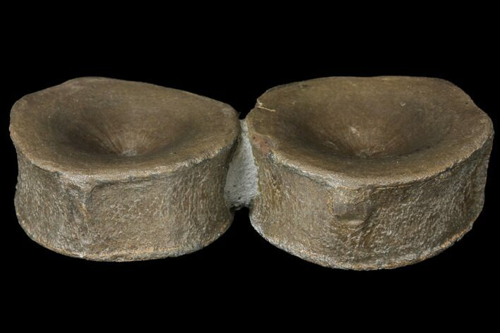 "3.7"" Two Beautiful Ichthyosaurus Vertebrae - Germany"