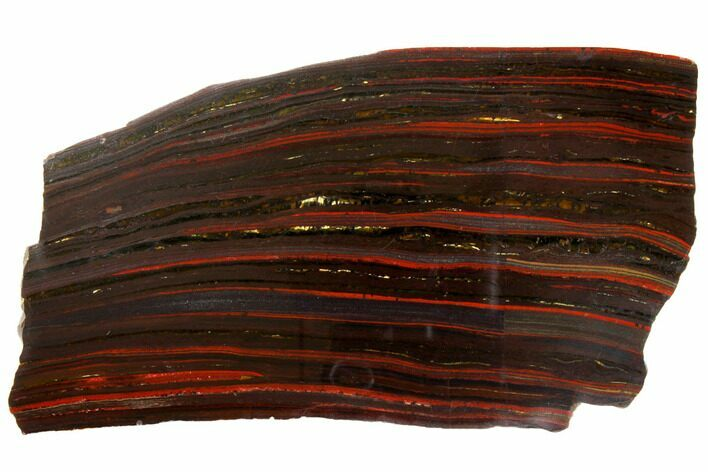 "8.1"" Polished Tiger Iron Stromatolite - 3.02 Billion Years"