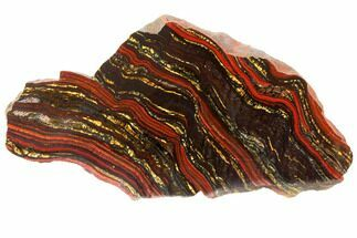 "Buy 8.1"" Polished Tiger Iron Stromatolite - 3.02 Billion Years - #129457"