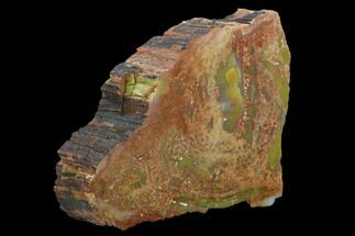 "Buy 5.8"" Colorful, Polished Petrified Wood Section - Arizona - #129466"