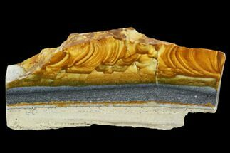 "4.5"" Polished Golden Picture Jasper Section - Nevada For Sale, #129719"