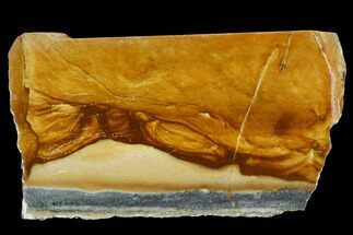 "4.3"" Polished Golden Picture Jasper Section - Nevada For Sale, #129722"