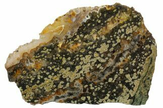 Ocean Jasper - Fossils For Sale - #129825