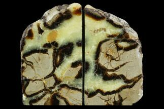 Septarian - Fossils For Sale - #129924