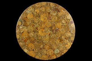 "Buy 8"" Composite Plate Of Agatized Ammonite Fossils - #130582"
