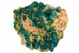 "3.1"" Gemmy Dioptase and Mimetite on Dolomite - Ntola Mine, Congo - #130500-2"