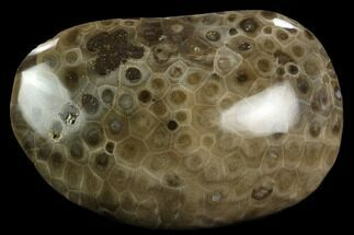 "Buy 3.95"" Polished ""Petoskey Stone"" (Fossil Coral) - Michigan - #131086"
