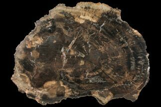 "Buy 13.5"" Petrified Wood (Woodworthia) Round - Arizona - #131161"