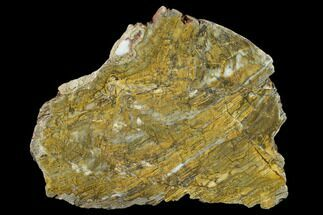 Strelley Pool Stromatolite - Fossils For Sale - #130635