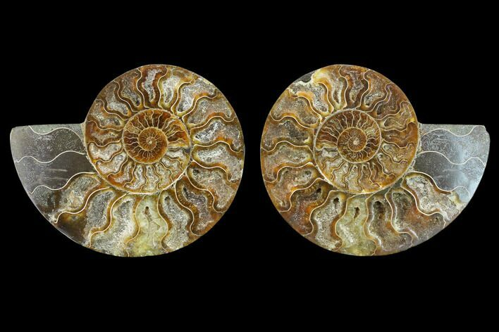 "5.9"" Agatized Ammonite Fossil (Pair) - Beautiful Preservation"