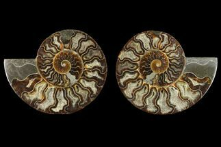 "5.5"" Agatized Ammonite Fossil (Pair) - Crystal Pockets For Sale, #130055"
