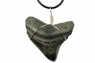 "2"" Fossil Megalodon Tooth Necklace For Sale, #130973"