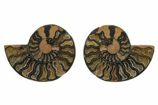 "4.55"" Cut/Polished Ammonite Fossil (Pair) - Unusual Black Color For Sale, #132572"