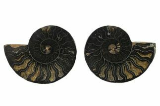 "3.95"" Cut/Polished Ammonite Fossil (Pair) - Unusual Black Color For Sale, #132566"