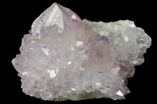 "1.4"" Cactus Quartz (Amethyst) Crystal Cluster - South Africa For Sale, #132470"