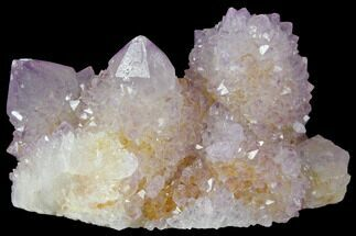"2.5"" Cactus Quartz (Amethyst) Crystal Cluster - South Africa For Sale, #132512"