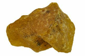 Amber - Fossils For Sale - #132819