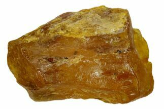 Amber - Fossils For Sale - #132822