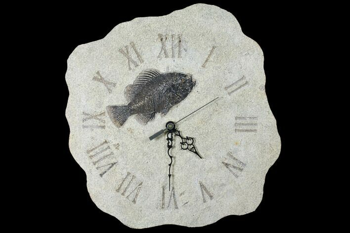 "13.8"" Tall Clock With Cockerellites Fish Fossil - Wyoming"