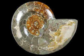 "6"" Wide Polished Fossil Ammonite ""Dish"" - Inlaid Ammonite For Sale, #133247"
