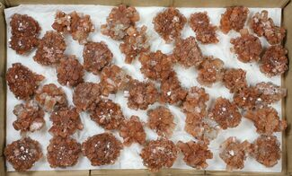 Aragonite - Fossils For Sale - #134142