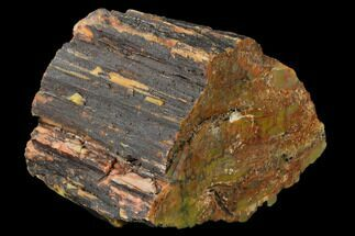 "Buy 5.6"" Colorful, Polished Petrified Wood Section - Arizona - #136186"