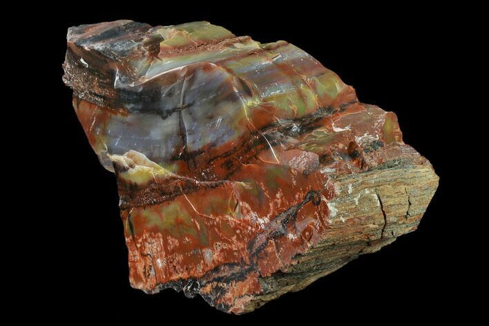 "9.1"" Colorful, Polished Petrified Wood Section - Arizona"